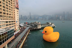 Rubber duck in hong kong Royalty Free Stock Photography