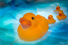 Rubber duck leading his duckling Stock Photography