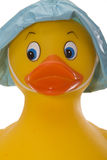 Rubber Duck Looking Straight-on Stock Photos