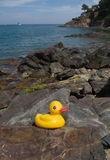 Rubber Duck On Mediterranean Shore. A rubber duck on rocks in the town of Collioure, France.  The Mediterranean Sea provides the backdrop for this sunny Stock Photos