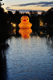 Rubber Duck in Parramatta River Royalty Free Stock Photography