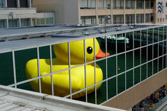 Rubber Duck floats in Hong Kong - the reflection Royalty Free Stock Image