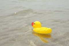 Rubber duck on the sea Royalty Free Stock Photo