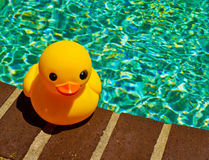 Rubber duck on side of pool Royalty Free Stock Image