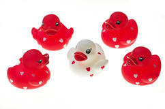 Rubber duck toys Stock Photography