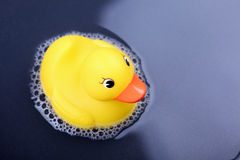 Rubber duck in the water Stock Images