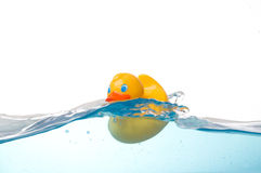Rubber Duck in Water. Rubber Duck Floating in Water Royalty Free Stock Photography