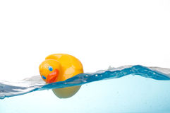 Rubber Duck in Water. Rubber Duck Floating in Water Royalty Free Stock Photo