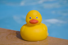 Rubber Duckie Stock Photography