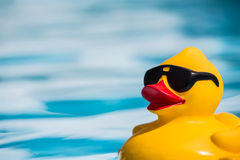 Rubber duckie Royalty Free Stock Images
