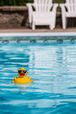 Rubber duckie Stock Images