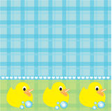 Rubber Duckies Stock Afbeeldingen