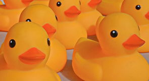 Rubber Duckies at the Festival of Canadiana Royalty Free Stock Photography
