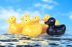 Rubber Duckies floating on water Royalty Free Stock Images