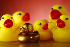 Rubber duckies and golden rubber duckling Stock Images
