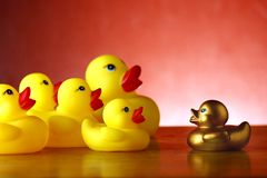 Rubber duckies and golden rubber duckling Stock Image