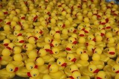 Rubber Duckies Stock Photo