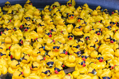 Rubber Duckies with Sun Glasses Royalty Free Stock Image