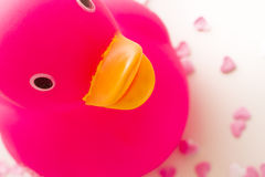 Rubber Duckling Royalty Free Stock Image