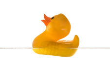 Rubber duckling Royalty Free Stock Images
