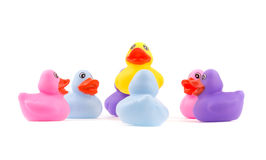 Rubber ducklings in a circle, with one above the others Stock Image
