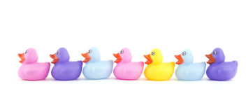 Rubber ducklings in a row, on white Stock Photography