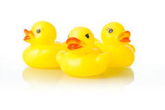 Rubber ducklings Stock Image