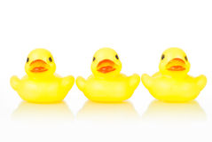 Rubber ducklings Royalty Free Stock Photography