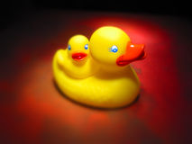 Rubber ducks. Toy rubber ducks Stock Photos