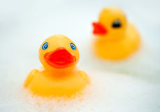 Rubber ducks Royalty Free Stock Photo