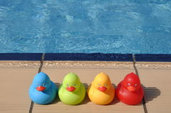 Rubber ducks. Four colorful rubber ducks at the pool side (kids toy Royalty Free Stock Photography