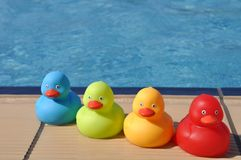 Rubber ducks. Four colorful rubber ducks at the pool side (kids toy Royalty Free Stock Image