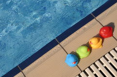 Rubber ducks. Four colorful rubber ducks at the pool side (kids toy Stock Images