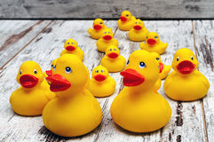 Rubber Ducks Stock Photos