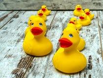Rubber ducks Stock Photography