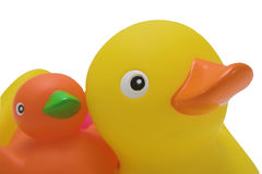 Rubber ducks. Two rubber ducks ready for bath time stock photos