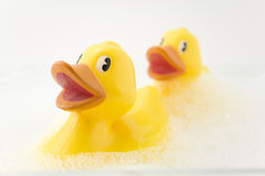 Rubber Ducks. In bubble bath Royalty Free Stock Image