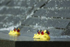 Rubber Ducks. Floating in a fountain- shallow depth of field, room for text at top Stock Photos