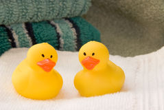 Free Rubber Ducks Stock Photography - 4813242