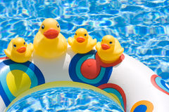 Rubber ducks  Stock Images