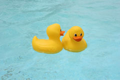 Rubber ducks. Gossiping rubber ducks in the pool Stock Images