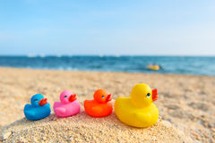 Rubber ducks at beach Stock Image