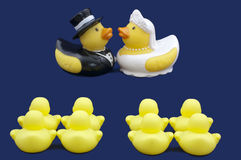 Rubber Ducks Bride and Groom Wedding Ceremony Stock Photos