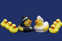 Rubber Ducks Bride and Groom and Wedding Party Stock Images