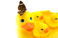 Rubber Ducks with Butterfly Royalty Free Stock Photo