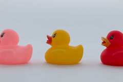 Rubber Ducks in Different Colors Royalty Free Stock Photos
