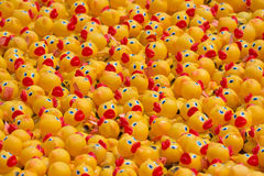 Rubber Ducks en Masse Stock Photo