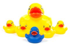 Rubber ducks family stock photography