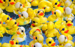 Rubber ducks with glasses stock photos