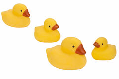 Rubber Ducks - Isolated Royalty Free Stock Image